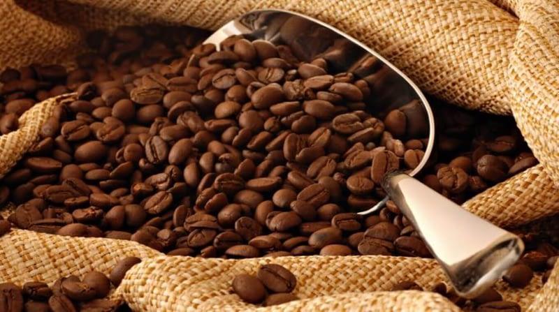Discover the Coffee Tour in Intag Valley Ecuador