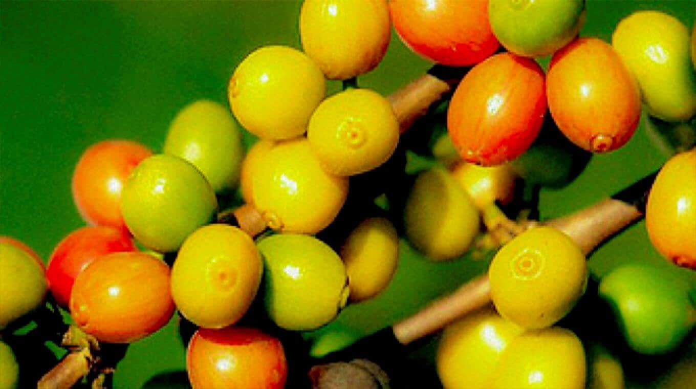 Discover the Coffee Tour in Intag Valley Ecuador